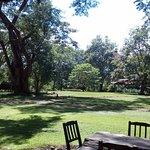The Rivertrees Country Inn garden