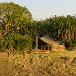 Tent at Mukambi Plains Camp, Busanga