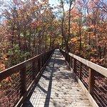 The wooden walkway to Bald Rock is beautiful