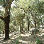 bosque de alcornoques cercanos a Grazalema