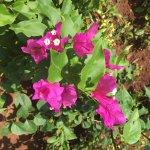 Bild från Park Hyatt Goa Resort and Spa