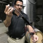 Tasting a barrel sample at Alpha Omega