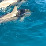 More dolphins 🐬