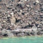 Foto di Fair Wind Big Island Ocean Guides