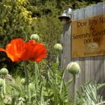 The Doe Bay Spa and Serenity Gardens!