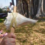 Lightning Whelk Tool