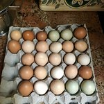 Fabulous free range chicken eggs!