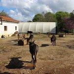 Donkeys can walk around
