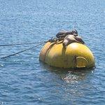 Foto de San Diego Whale Watch