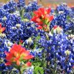 Wildflowers near the Wildflower...