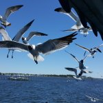 Had an amazing time on the Captain Andersons tour to Sea Shell Island.