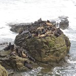 Seals and sea lions on the rocks just off the coast.