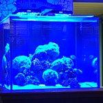 Photo of Juno Beach Fish House