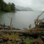 Solitude amongst the driftwood and old logs