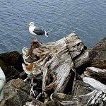 Foto de Cape Lookout State Park