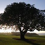 Cool looking tree