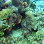 Scuba Diving photos from Yucab & Paradise