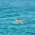 Turtles in Perhentian
