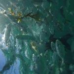 Photo of Marinarium Excursions - Reef Explorer