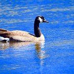 Taken at Lake Cuyamaca, what a beautiful site.....