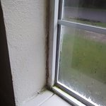 Pool area window with mold growth