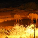 Elephants at the Kilaguni Serena Lodge