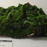 Pyromorphite on black Mn-oxide and with barite crystals