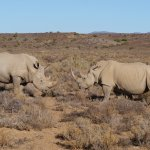 Photo of Sanbona Wildlife Reserve - Tilney Manor, Dwyka Tented Lodge, Gondwana Lodge