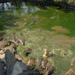 Photo of Million Years Stone Park & Pattaya Crocodile Farm