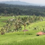 Jatiluwih the largest rice paddy terraces in Bali.
