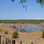 Halali camp watering hole