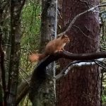 The amazing red squirrel we spotted just by the back of the lodges!