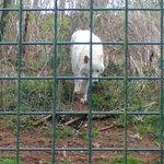Foto di Five Sisters Zoo