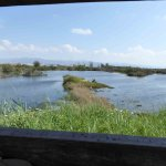 View from one of the Hides