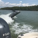 dolphin follwing in our wake