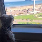 Pepper the dog enjoying the sunny view from our room!