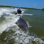 Foto di Capt. Ron's Awesome Everglades Adventures