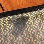 Dog pee in the elevator
