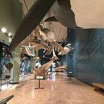 New Brunswick Museum Foto