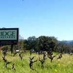 Ridge Lytton Springs.