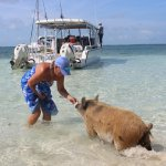 swimming pigs came to the boat and we fed them and swam with them