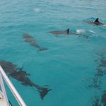 100s of Dolphins awam aroung the boat for an hour! The more we cheered the more they played!