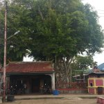Centuries old banyan tree that stood the passing of time