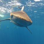 Foto de North Shore Shark Adventures
