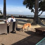 Outdoor lounge area is dog friendly. Hear that surf and enjoy happy hour.