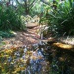 SkyHigh Mount Dandenong Garden