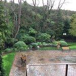 The back garden...