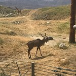 Living Desert Zoo & Gardens