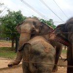 18 elephants to see