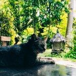 Foto de Fivelements Bali Retreat